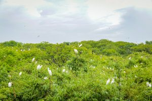 Bang Lang bird sanctuary