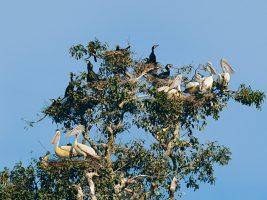 Prek Toal Bird Sanctury