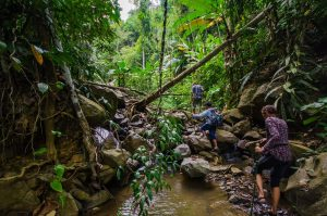 Jungle trails in Pailin, Cambodia